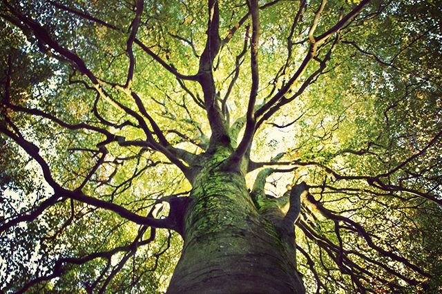 The 10 Most Extraordinary Trees in the World!!