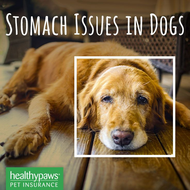Stomach Issues in Dogs (With images) Dogs, Cute puppies