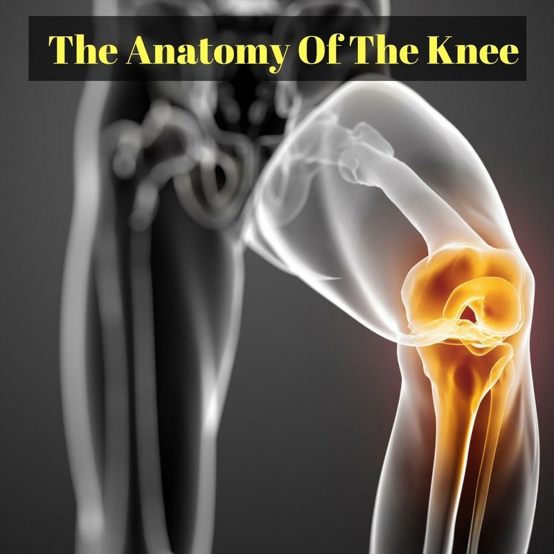 Learn about the anatomy of the knee - the first step in diagnosing ...