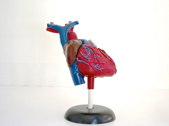 Have a Heart - Vintage Anatomical Heart Model, Halloween