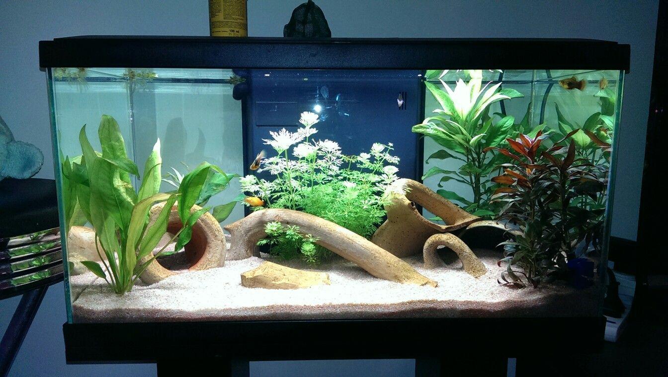 Aquarium 60l With Real Roman Amphorae Fish Tank Aquarium Aquascape