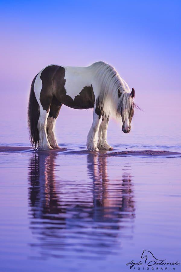 Horse / 500px