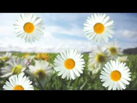 Futazh Polyanka I Romashki Hd720p Youtube Romashki