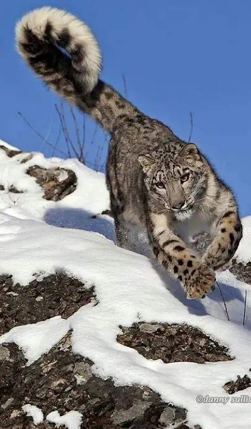 Animals wild image by Johnnie m Jamaica on Big Cats