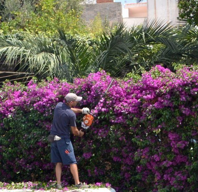 Cerco de azaleas cercos pinterest cerca viva - Arbustos para vallas ...