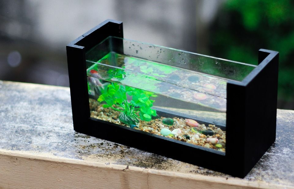 Fish Aquariums Can Also Be Used To Help Children Learn How To Responsibly Take Care Of Pets As Well However It Small Fish Tanks Aquarium Hermit Crab Tank