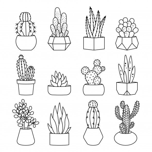 Photo of Line Style Cactus And Succulents Icon Set