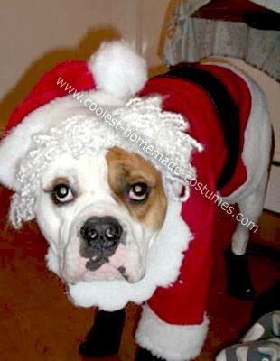 Coolest Homemade Santa Clause Dog Costume | Santa clause, Costumes ...