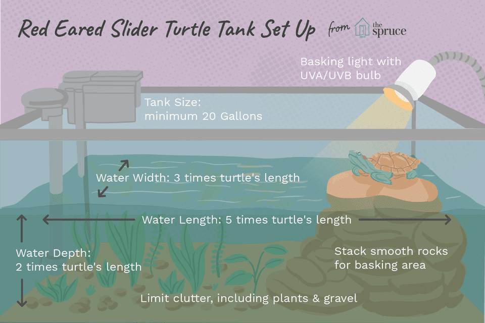 Give Your RedEared Slider Turtle the Best Tank Red