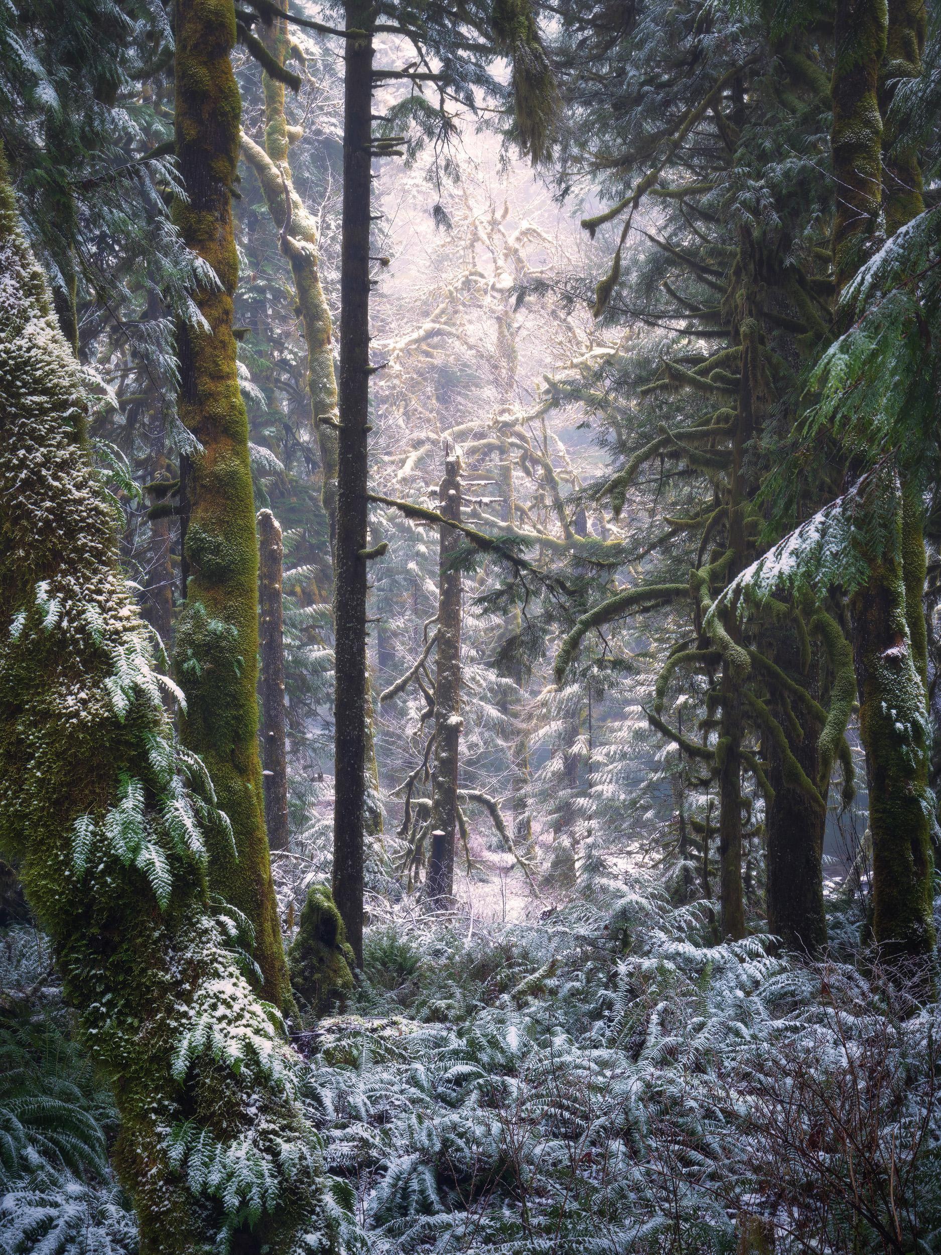 Salmon River Trail Oregon. [1875 x 2500] [OC] JustinPoe