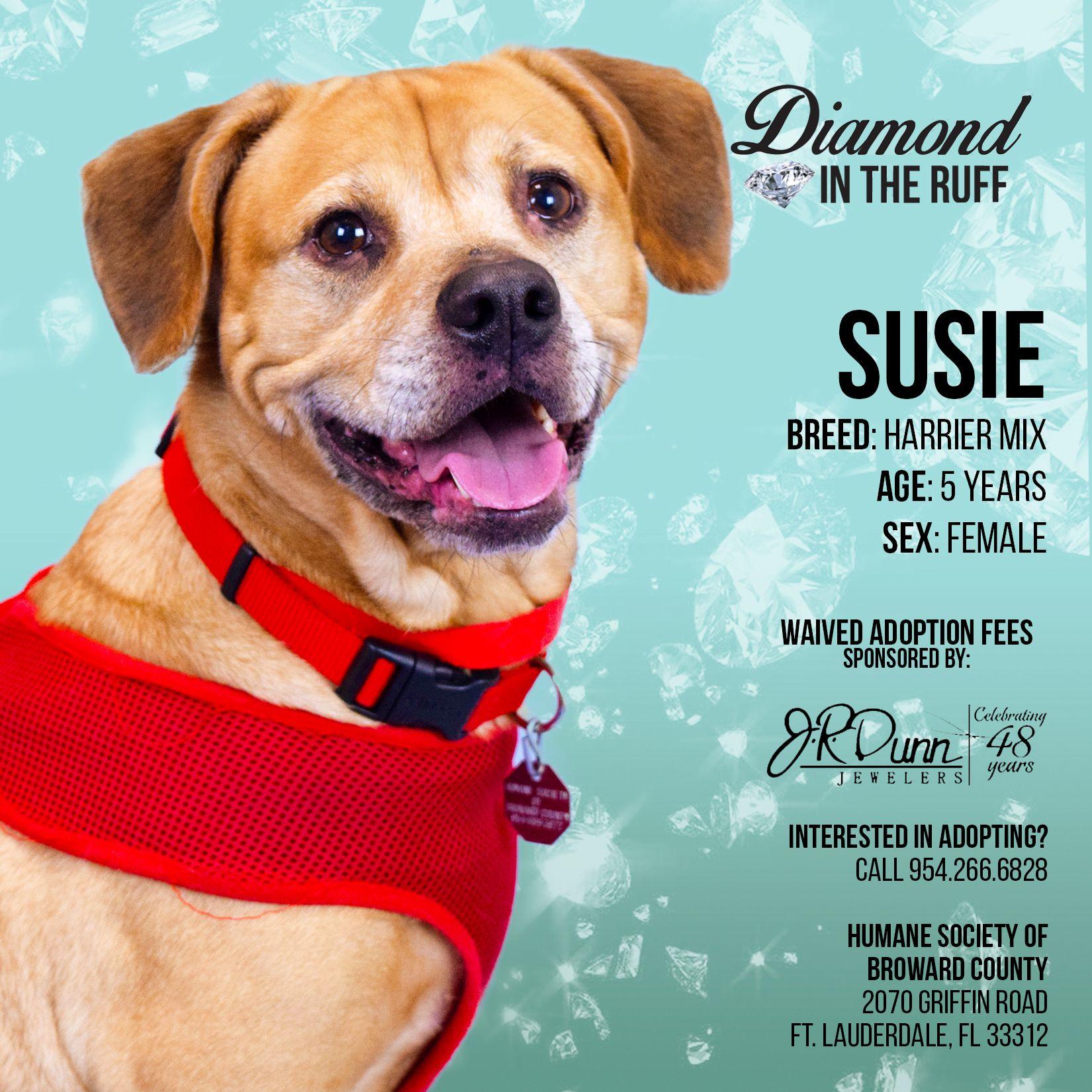 Diamond in the Ruff Susie Humane society, Ruff, Dog mom
