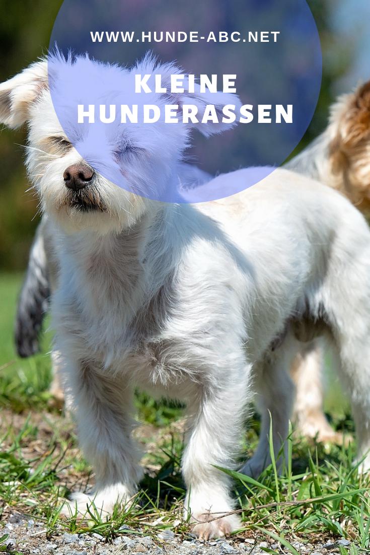 Kleine Hunderassen Allgemeine Informationen Zum Thema