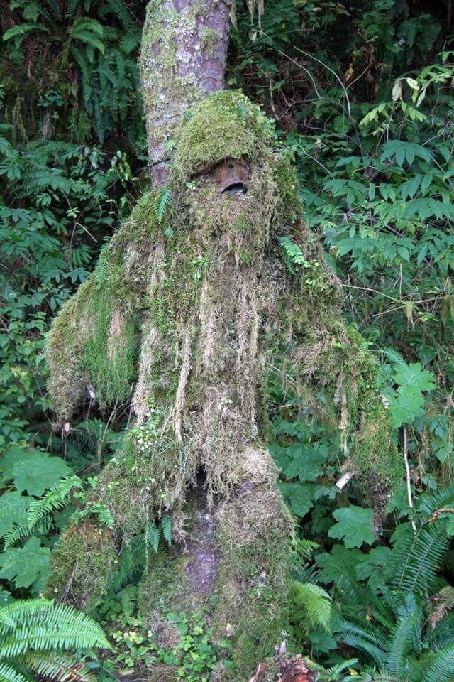 Another Bigfoot tree stump Evergreen state, Travel writer