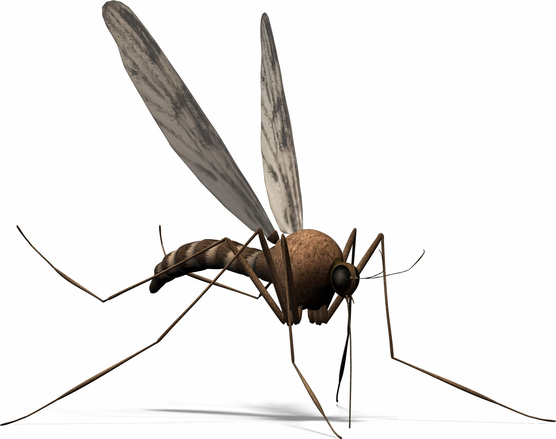 how to get rid of love bugs in florida