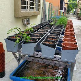 Affnan S Aquaponics Backlane Gutterbeds Planting Simple
