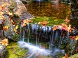 Colorfall Wallpaper Waterfalls Nature With Images Garden Waterfall
