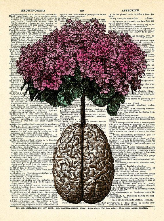 Brain Human Anatomy Flowers Dictionary Art Print, Anatomical Brain ...