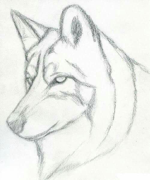 Pin By M Mido On How To Draw Animals Animal Drawings Wolf Drawing Pencil Drawings Easy