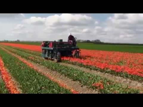 Máy thu hoạch hoa công nghệ Mỹ | Máy nông nghiệp công nghệ cao