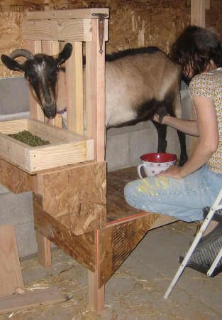 Milking Stand and other things about goats
