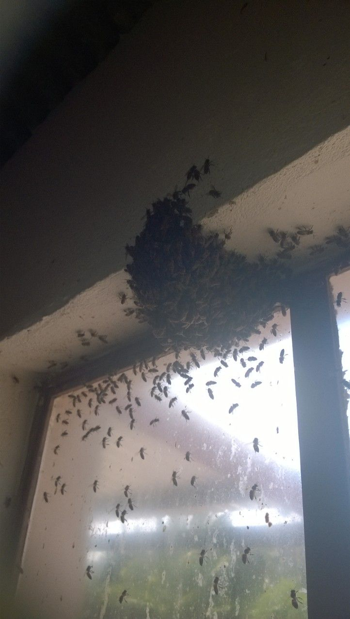 Bee removal in johannesburg bees in a window roodepoort