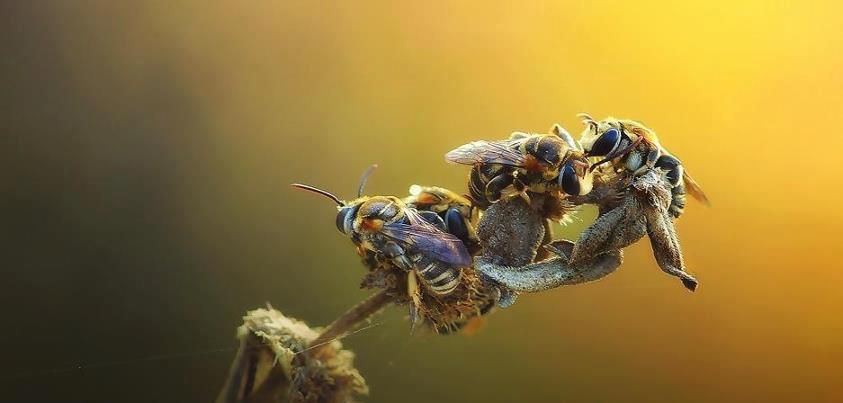 The Beautiful Bee