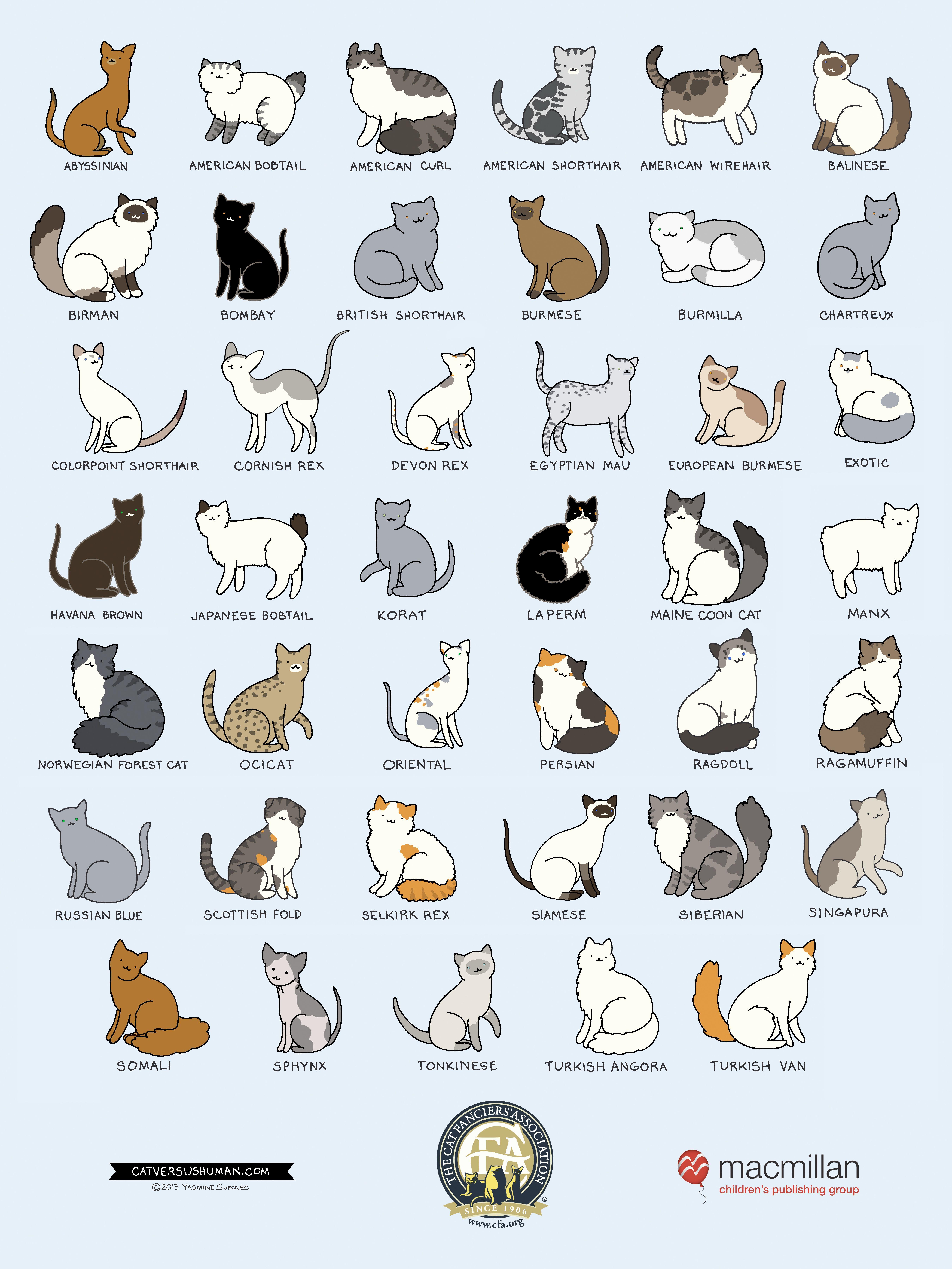 breedposterkids.jpg (5400×7200) Cat breeds chart, Cat