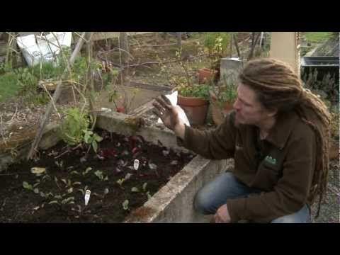 Deep Mulch Gardening , New Zealand Permaculture Grassroutes Garden Tips Episode 1 Re
