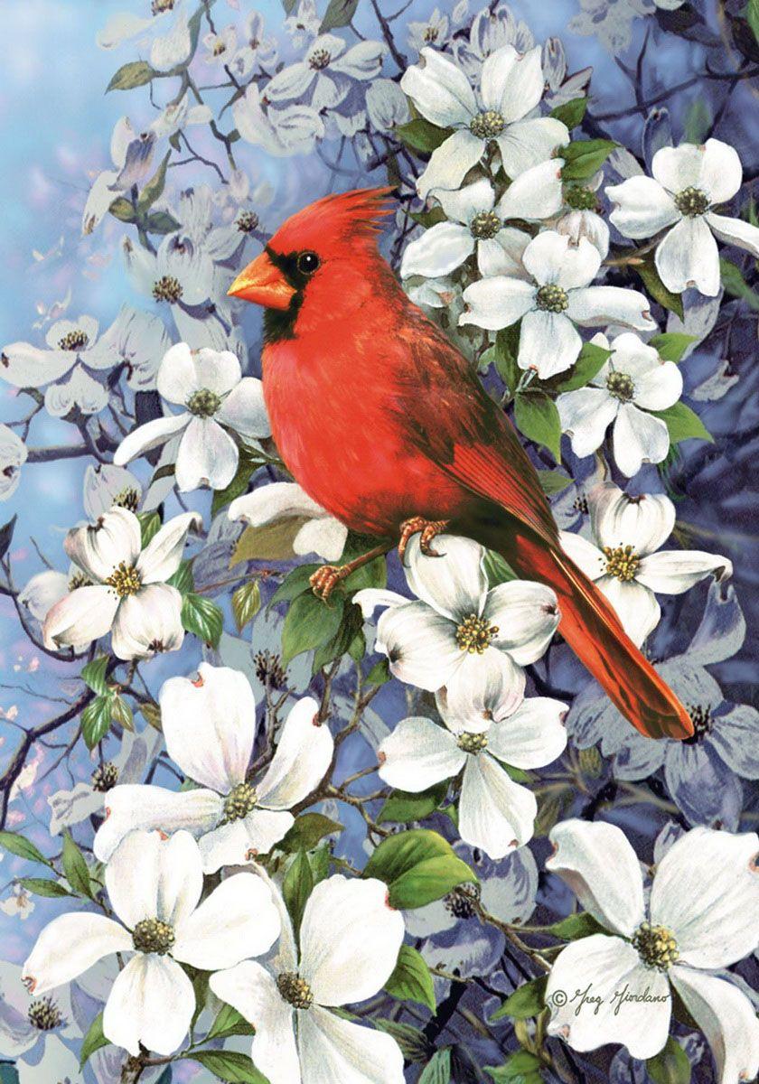 Рисунки красивых птиц на цветах