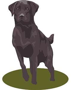 Tips For Canine Training - Food-Protecting Issues - https://glimpsebookstore.com/secrets-to-dog-training-food-protecting-issues/