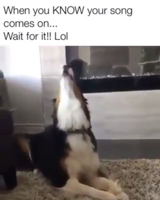 New Funny Pets Wait for it