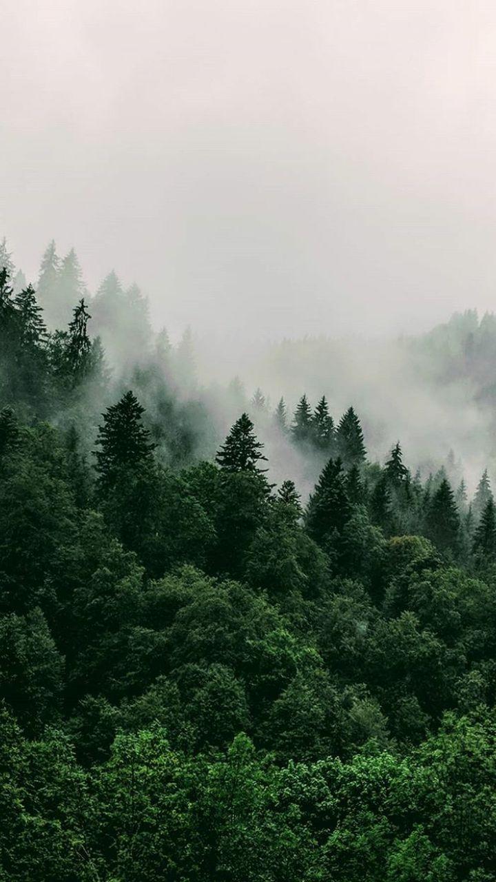 Perdez Vous Dans La Foret In 2020 Forest Wallpaper Green Aesthetic Nature Wallpaper
