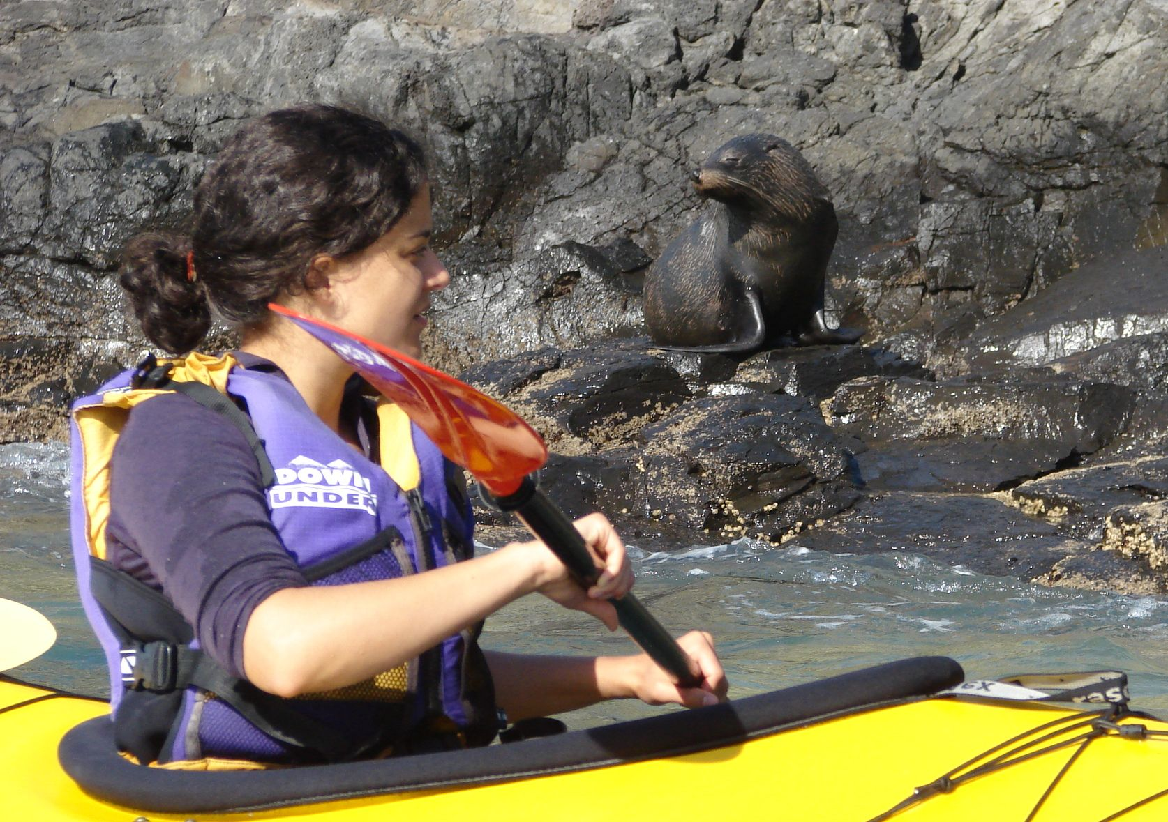 Kayaking by New Zealand seal colony and many pups.