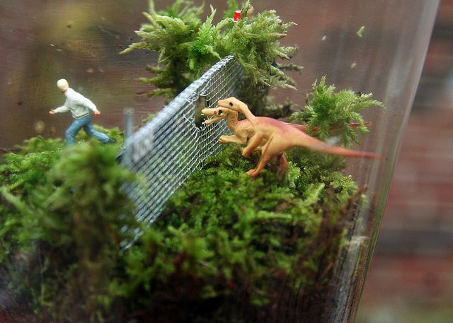 Twig Terrariums by twigterrariums, via Flickr   If you love terrariums, visit this places website twigterrariums.com to see tons of unusual terrariums. They are coming out with a book in May.