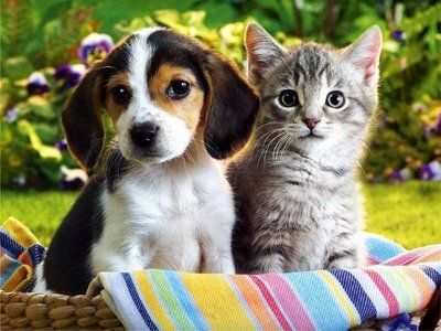 Kitten and puppy in a basket!