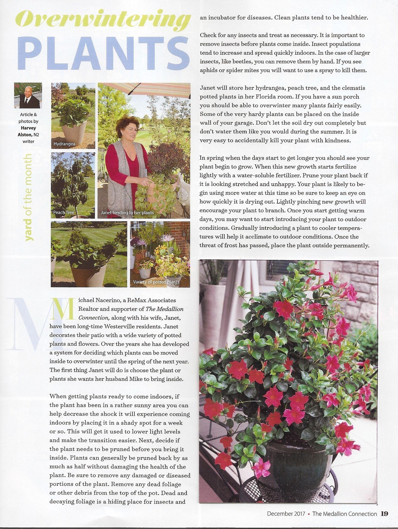 Overwintering Plants | HARVEY ALSTONS ARTICLES | Pinterest ...