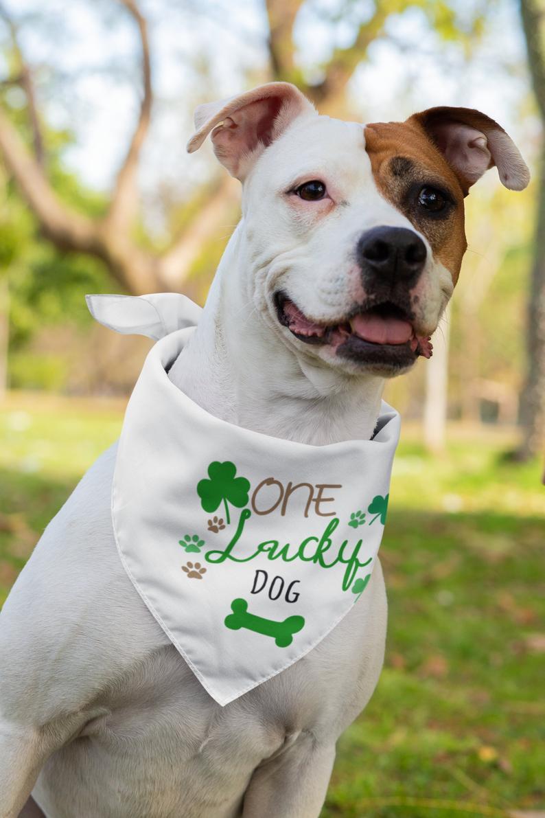 Cute Bandana Patrick/'s Day Dog Bandana CUSTOM St Pet Bandana Funny Bandana Sassy Bandana Lucky Mother Pupper
