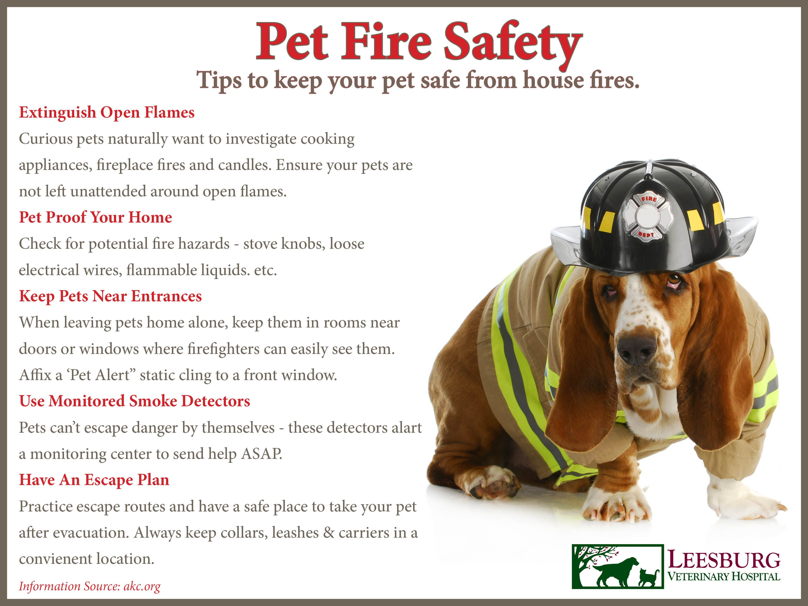 July 15 Declared National Pet Fire Safety Day to Help