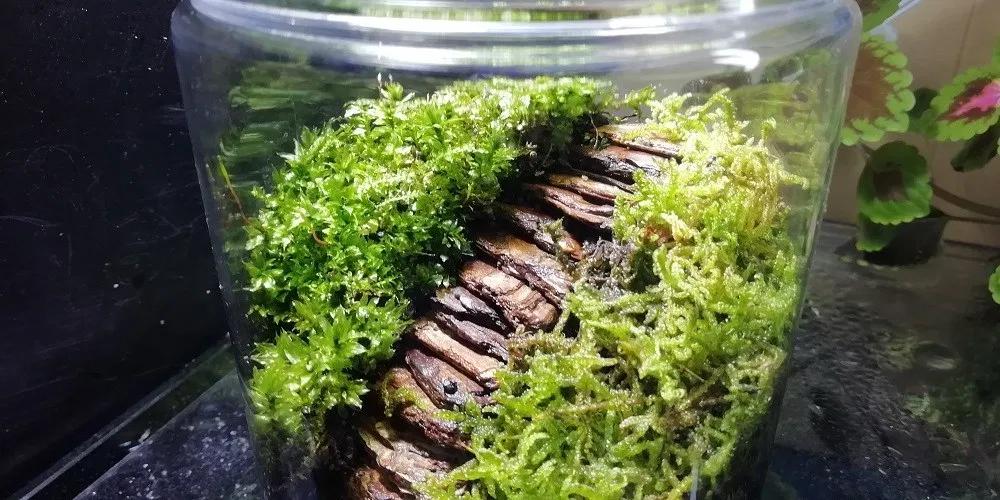苔とボトルの苔テラリウムの作り方 100均容器で安く手軽に出来上がり テラリウム 苔テラリウム 苔