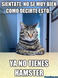 Resultado De Imagen Para Memes En Espanol Animales Memes Graciosos Chiste De Gatos Memes Divertidos