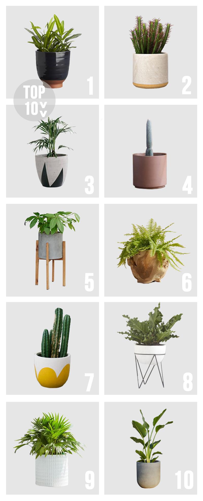 Top 10 Pots Planters Amber Interiors Plants 400 x 300