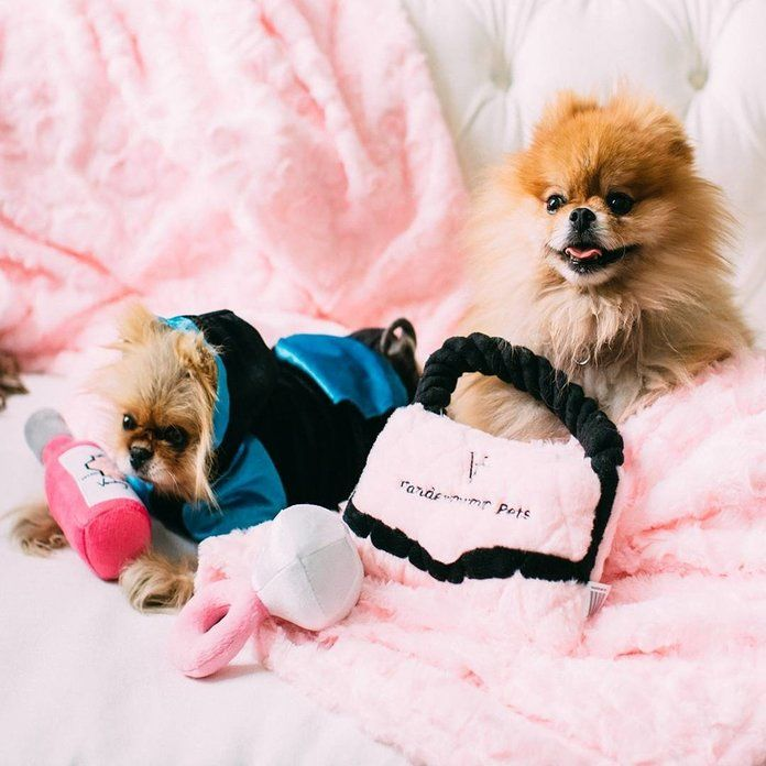The Best Dog Clothing Brands For Stylish Pet Clothes Dog