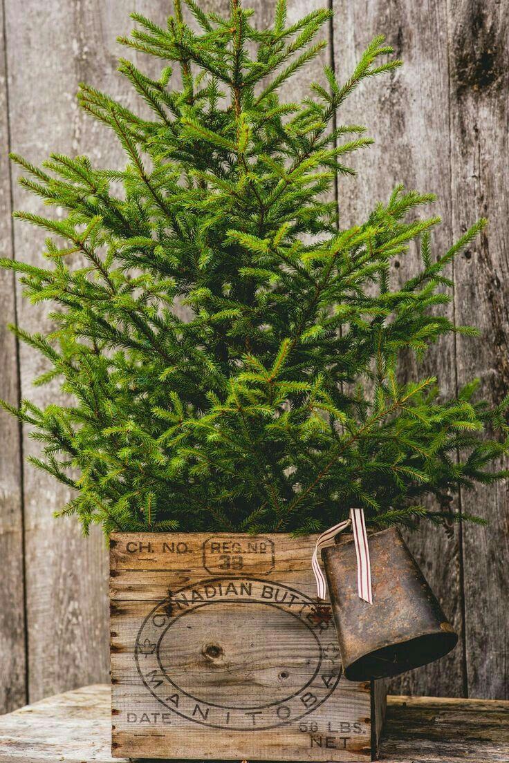 Little Tree In A Butter Box Adorned With A Cow Bell | Christmas Decorating  | Pinterest | Weihnachten, Weihnachtsdeko Ideen Und Weihnachtsbilder