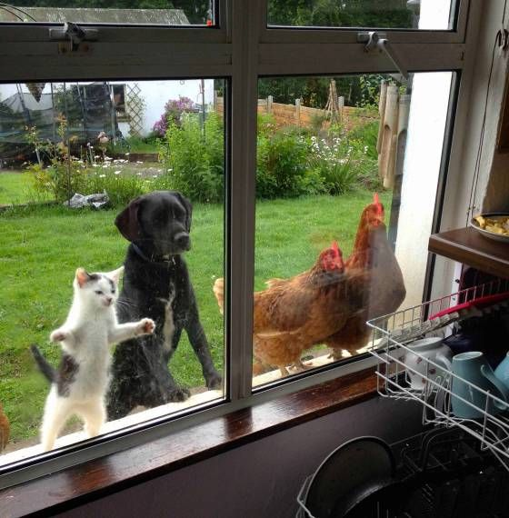 Hey Let Us In Funny Animal Pictures Cute Animals Funny Animals