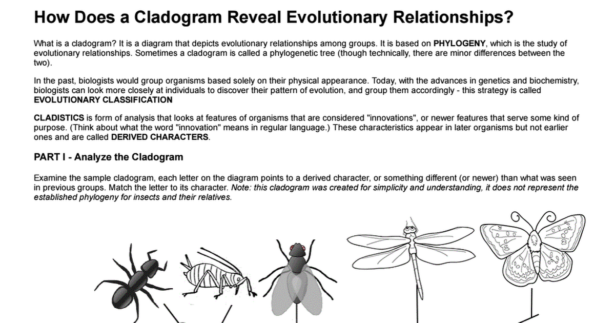 Cladogram AnalysisPdf  Cool For School    Pdf And School