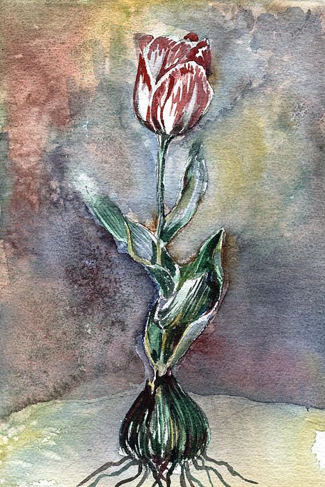 """The Red Tulip. This reminds me of when my oldest son at age 3,  """"picked"""" a flower for me...it looked just like this! LOL, and he was so proud ;)"""