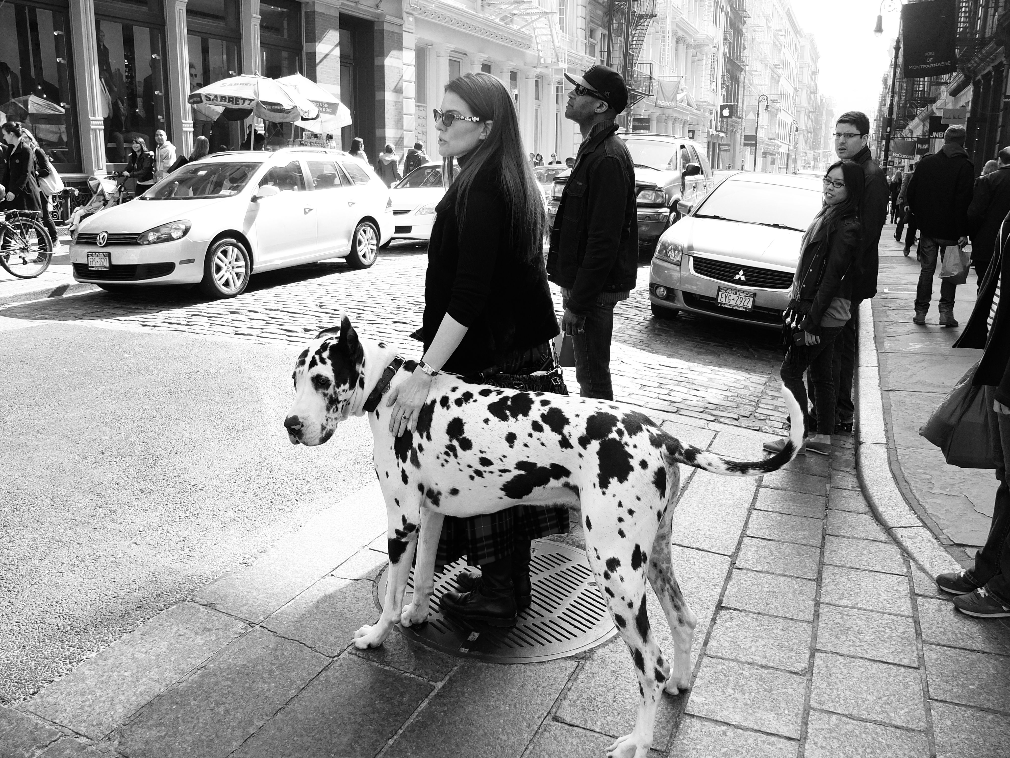 Stylish New York City This Couple Really Leaves A Mark Esprit Ny Facehunter Great Dane Dane Dog Great Dane Dogs