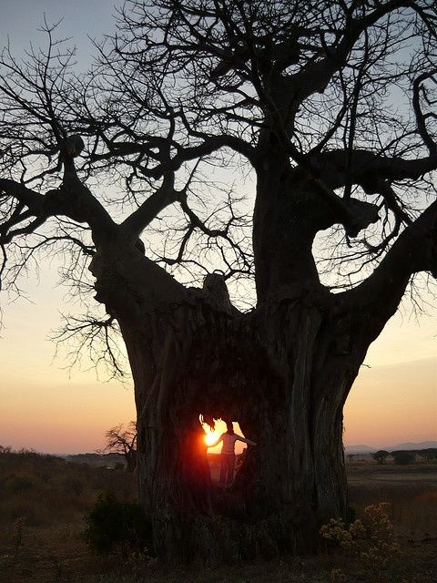 only God, only in Africa...certainly a tree of Life...breathtaking!♥