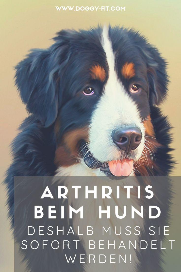 autoimmun polyarthritis hund