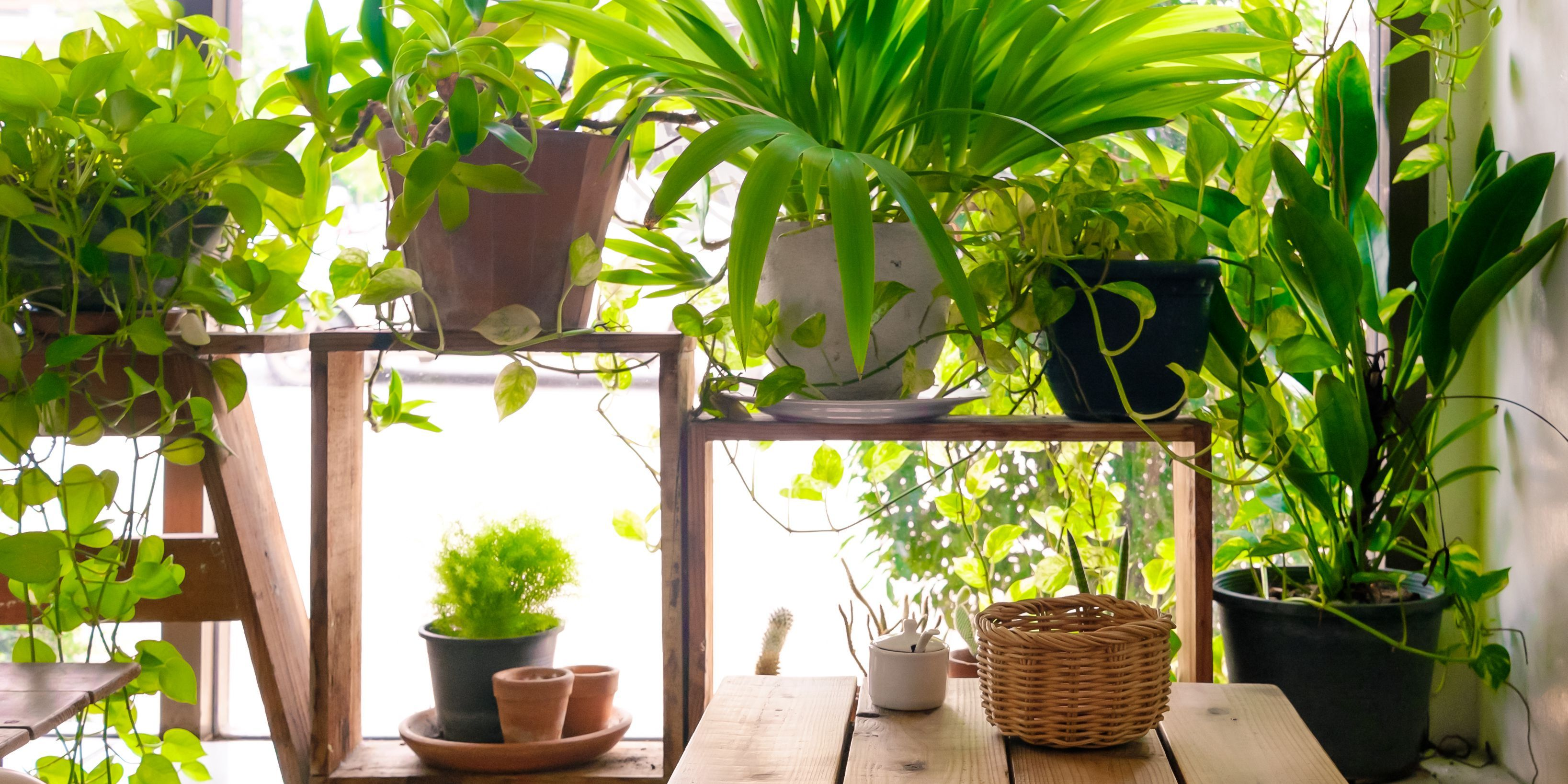7 Indoor Plants That Can Actually Purify The Air In